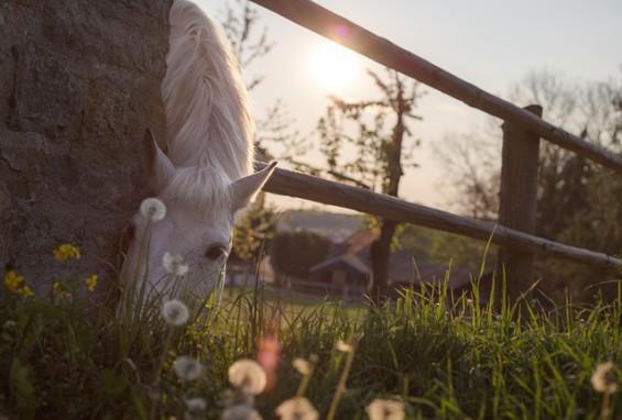 Familienurlaub auf dem Bauernhof