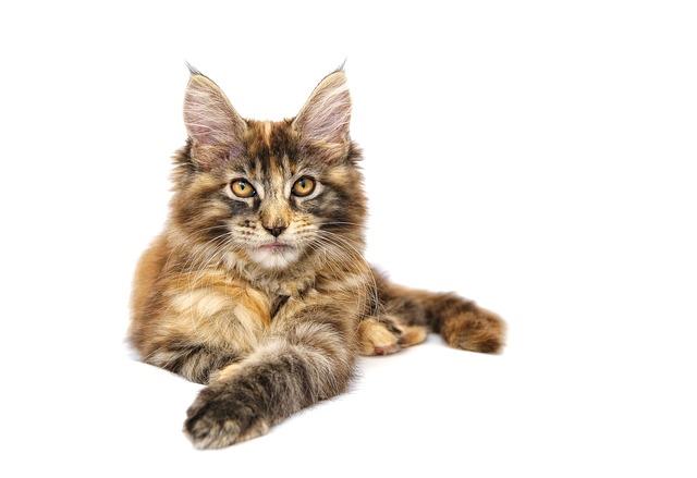 Katzen richtig halten